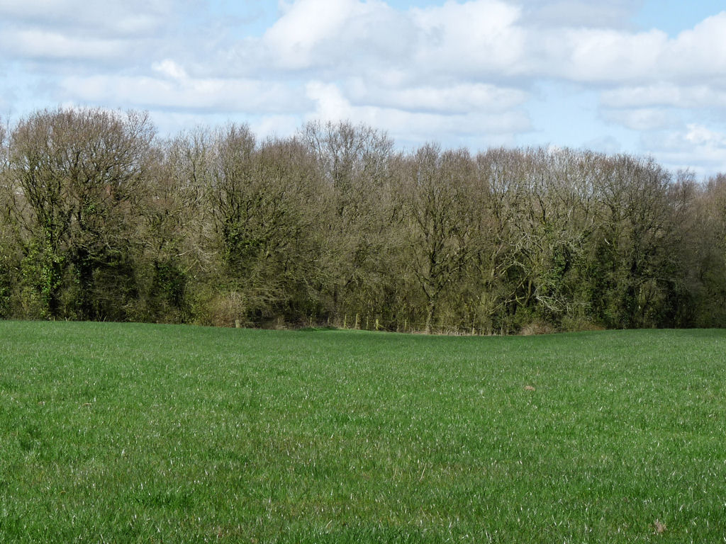 Row High Wood looking north